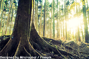 יערות הגשם הם מוקד למחקר ומציאת תרופות