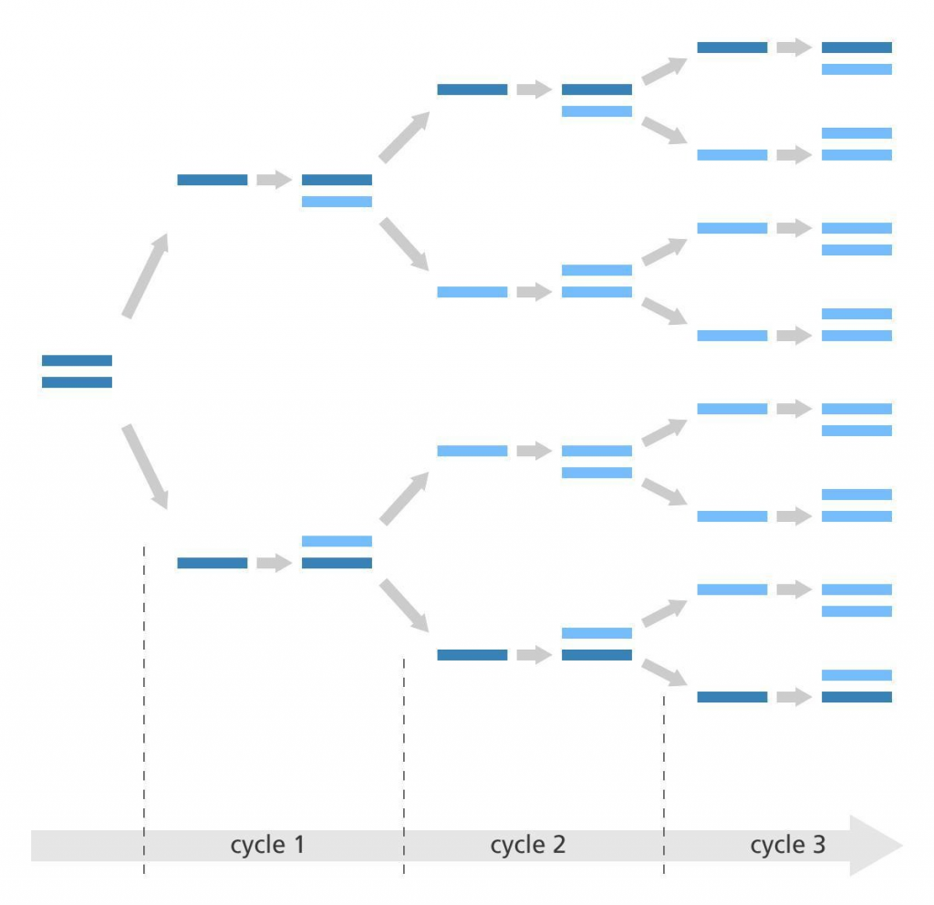 הדגמה גרפית לתהליך ההכפלה של חומר גנטי במכשיר PCR