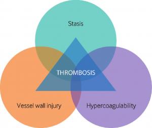 משולש וירכו - שלושת השלבים במנגנון הקרישה