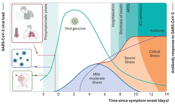 עומס ויראלי ויצירת נוגדנים בשלבים השונים של מחלת הקורונה