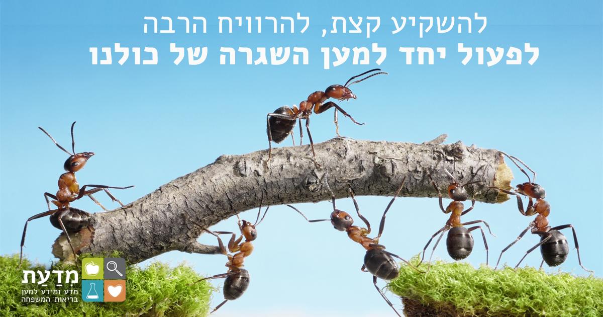 נמלים פועלות יחד