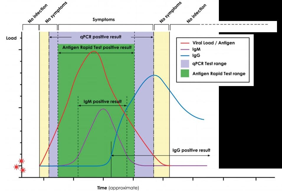 רמת הנגיף והנוגדנים בגוף אדם חולה וההתאמה לבדיקות שונות, לאורך תקופת המחלה